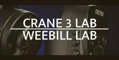 weebill and crane3